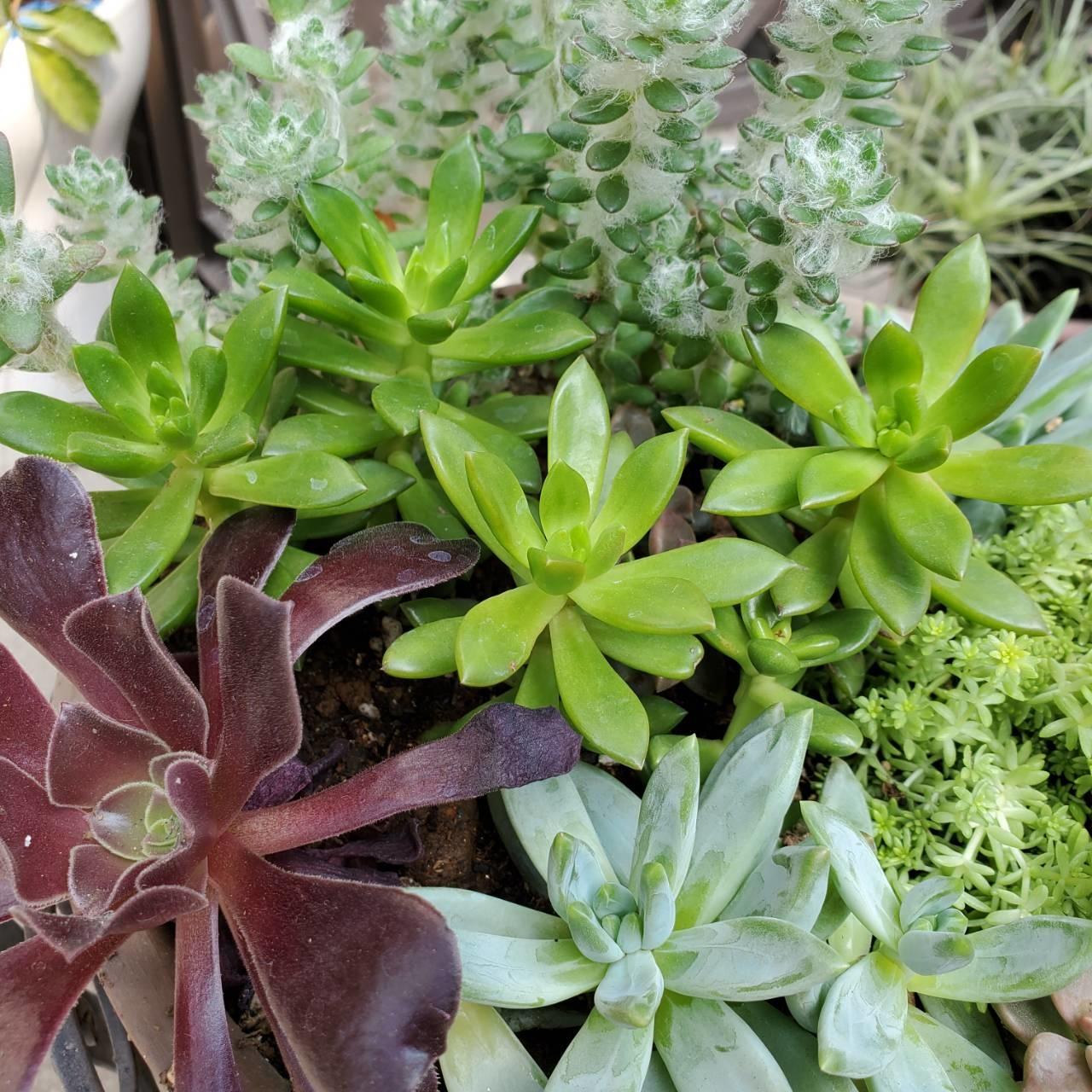 多肉植物を寄せ植えしてみました!